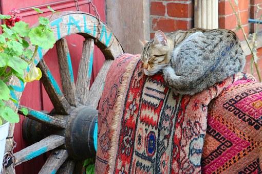 cat-1095723__340